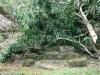 quirigua-61