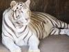 la_aurora_zoo-12