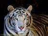 la_aurora_zoo-13
