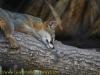 la_aurora_zoo-15