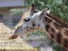 la_aurora_zoo-3